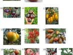 Семена томатов разных сортов
